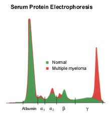 M-protein-graph