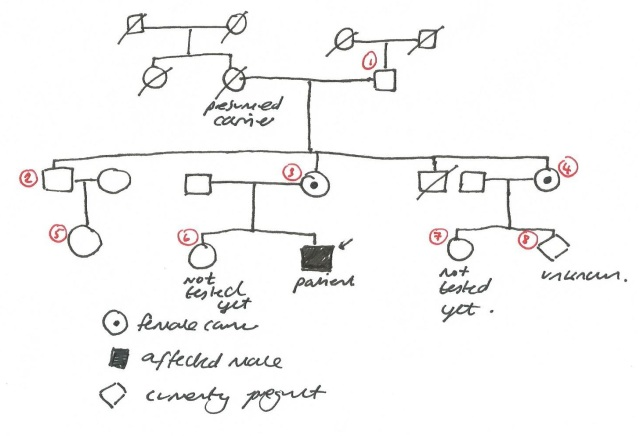 Haemophilia family tree 2